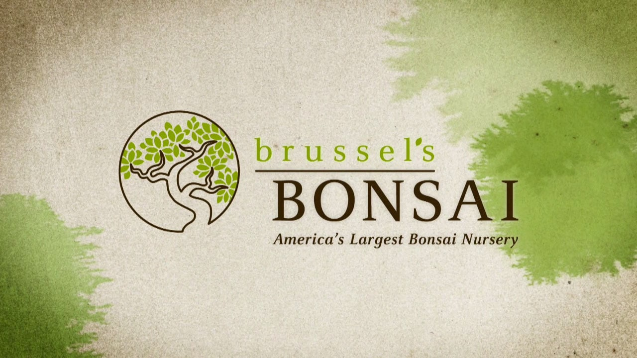 Brussell's Bonsai – Online Marketing Video